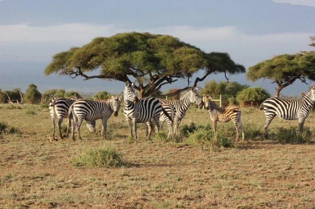 Les magnifiques endroits à voir lors d'un circuit au Kenya